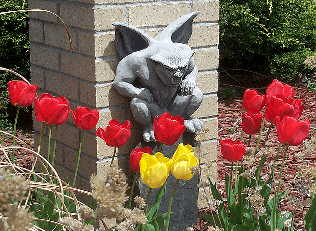 gargoyle through the tulips